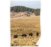 Wildlife wall art buffalo bison thunderbeast Yellowstone park landscape - In viaggio - Traveling Poster