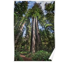 Great Redwood trees in forest naturalistic landscape wall art color - I Giganti Poster