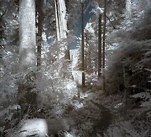 Path in cedar tree forest landscape naturalistic infrared - Nei Boschi Antichi by visionitaliane