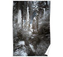 Path in cedar tree forest landscape naturalistic infrared - Nei Boschi Antichi Poster