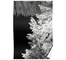 Tree and trees reflected in a lake geometrical black and white infrared - Geometrie naturali Poster
