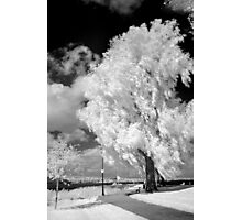 Infrared 7 Photographic Print