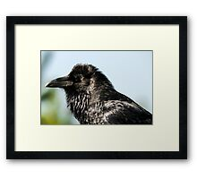 Raven from Yellowstone close up bird animal fine art - Il Briccone Framed Print