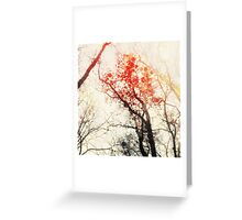Winter Silhouette Greeting Card