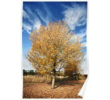 Yellow leaves tree fall in the Pacific Northwest warms colors of autumn seasonal fine art wall art - Rosso Poster