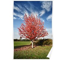 Red leaves tree fall in the Pacific Northwest warms colors of autumn seasonal fine art wall art - Rosso Poster
