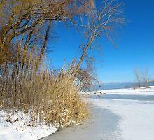Wintertime At Old Woman Creek by SRowe Art