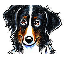 Bernese Mountain Dog Portrait Photographic Print