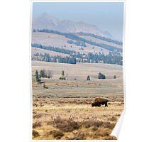 Wild buffalo bison bull Yellowstone park naturalistic - Thunderbeast Poster
