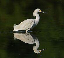 Snowy Egret by photosbyjoe