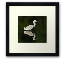 Snowy Egret Framed Print