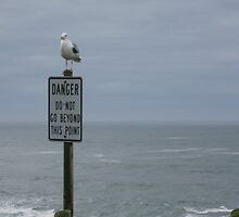 The Seagull Has Spoken by chris-m