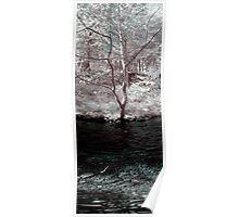 Panoramic fine art color infrared landscape tree on a creek - Le curve del tempo Poster