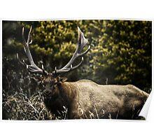 Male Elk in the wild animal naturalistic - Memoria di un Re Poster