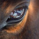 Horse Eye by Betsy  Seeton