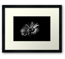 High contrast black and white flower Framed Print