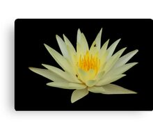 Water Lily Yellow 2 Canvas Print