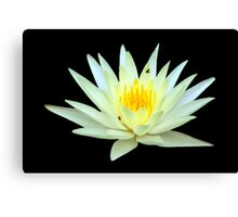 Water Lily Yellow 3 Canvas Print