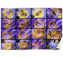 Bees at work in Water Lillies Collage Poster
