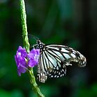Butterfly 3 by lmcarlos