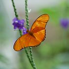 Butterfly 5 by lmcarlos