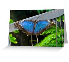 Butterfly 13 Greeting Card