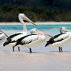 Pelicans Four by shuttersuze75