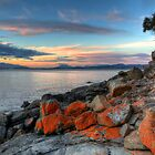 Lone Tree After Sunset - Droughty Point, Tasmania by clickedbynic