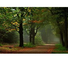 Autumnal uncertainty Photographic Print