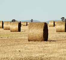 Haybale Cylinders by Jane McDougall