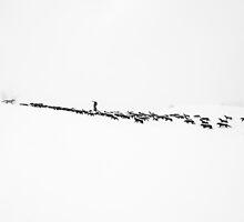 Wolves in the Snow by Govinda Niels Koervers