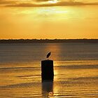 heron sunrise by cliffordc1