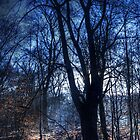 Epping Forest in Winter by Nigel Bangert