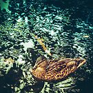 Duck by PaperPlanet