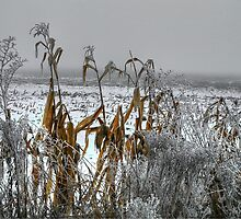 Corn - Snow - Ice by Charles & Patricia   Harkins ~ Picture Oregon