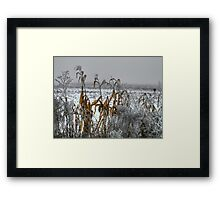 Corn - Snow - Ice Framed Print