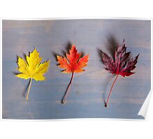 Autumn in a row Poster