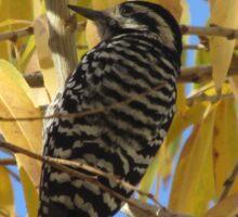 Ladder-backed Woodpecker in Autumn Tree Sticker