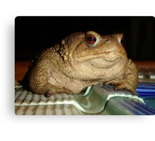 Close Up of A Common European Toad Canvas Print