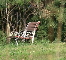 Viewing Spot by Kathi Arnell
