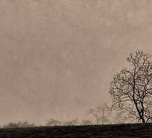 Panorama of trees in silhouette by MichaelBachman