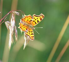 Hanging Butterfly by Kathi Arnell