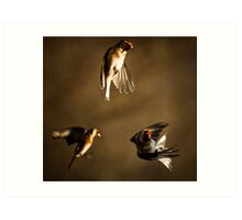Goldfinch Trio. Art Print