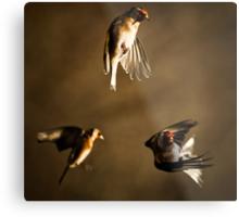 Goldfinch Trio. Metal Print