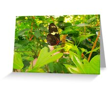 Butterfly  Greeting Card