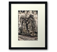 HDR grunge tree Framed Print