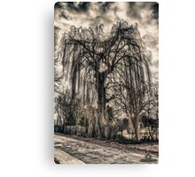 HDR grunge tree Canvas Print