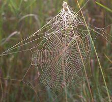 Foggy Web by Kathi Arnell