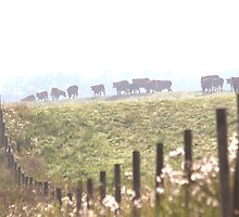 Cow LIne by Kathi Arnell
