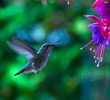 Fine art naturalistic animal photo bird against green background with fuchsia - Hummingbird by visionitaliane